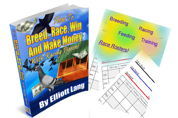 Download How to Breed, Race, Win and Make Money With Racing Pigeons